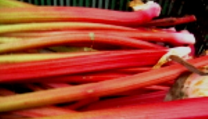 red rhubarb Red Rhubarb Blood Orange Marmalade